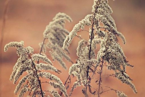 Zachowanie estetyki ogrodu