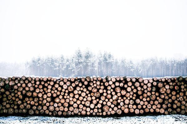 przyczepy leśne