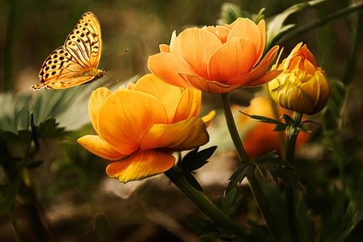 kwiaty jadalne