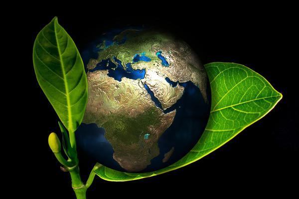 Żyj ekologicznie, uratuj planetę