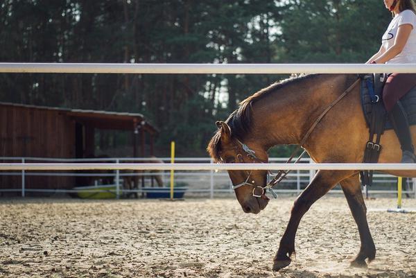 Wyposażenie do jazdy konnej