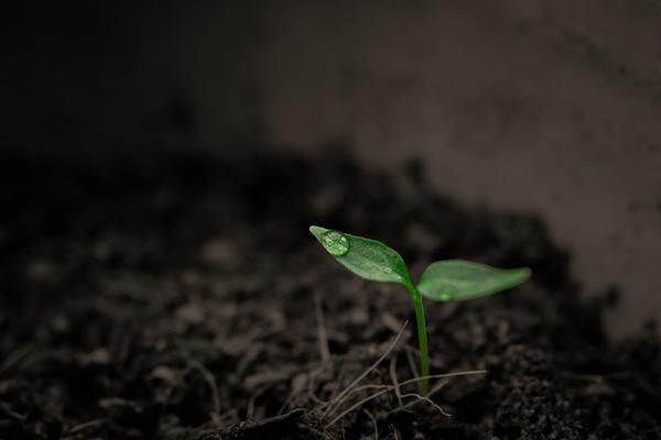 Pomiar pH gleby