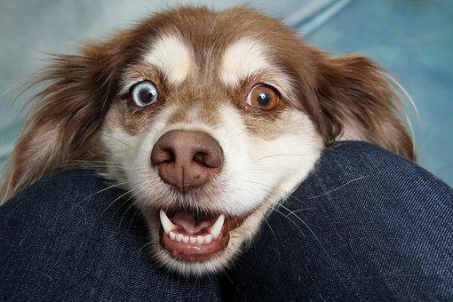 Czy makaron dla psa jest zdrowy?