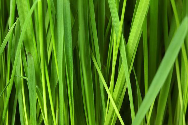 Kupno sztucznej trawy na balkon